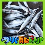 港でサバサビキを楽しむ <釧路編 釣り 9月>