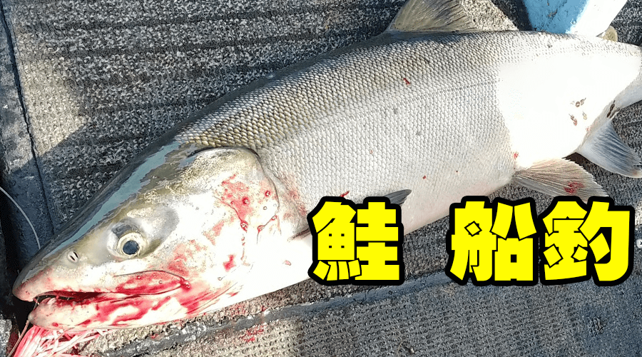 船釣り 鮭釣 オホーツク 網走沖にて  2020年10月